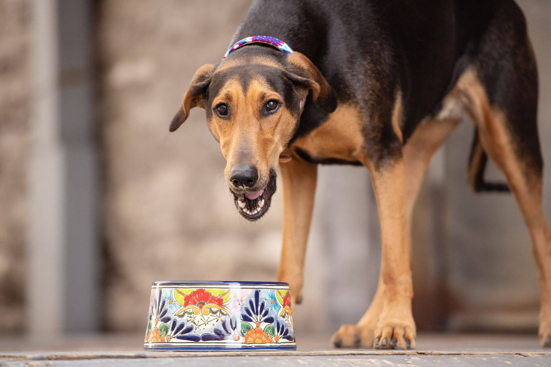 cute dog eating from ceramic bowl